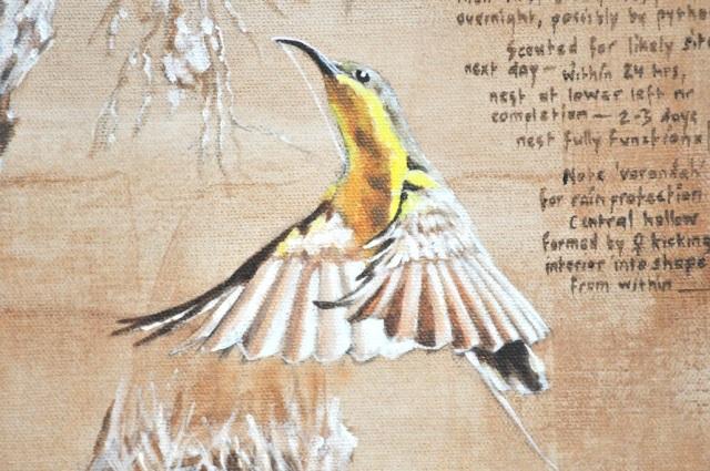 sunbird in flight