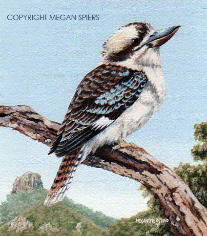 Laughing Kookaburra Copyright Megan Spiers